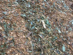 Tree Waste - First Grind